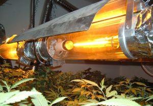 marijuana HID System