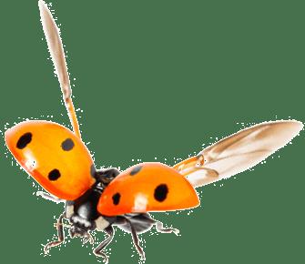 Cannabis Pests and Predators