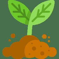 Planting Outdoor Cannabis Garden