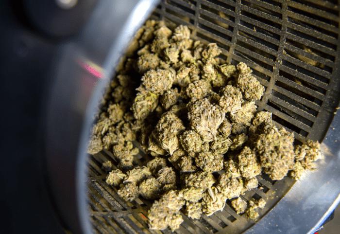 Cannabis Machine Guarding