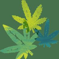 Cannabis Breeding