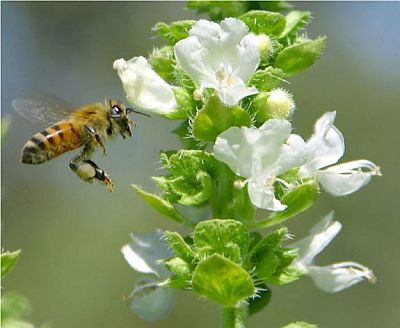 bees1 1822