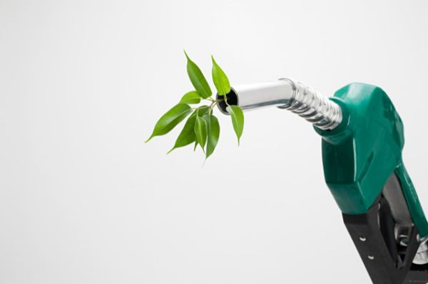 Leaves growing out of a petrol nozzle Image downloaded by Gillian Abbott at 10:20 on the 13/07/09