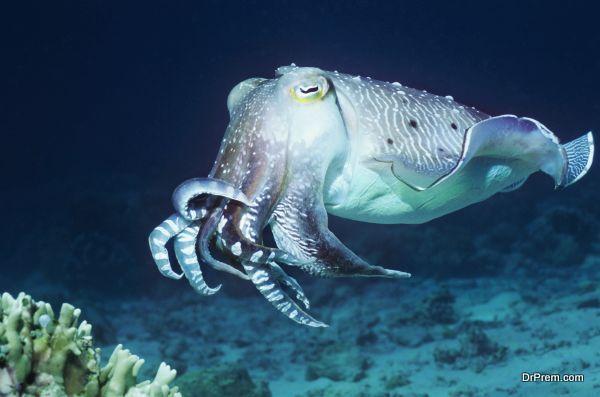 marine-conservation-4
