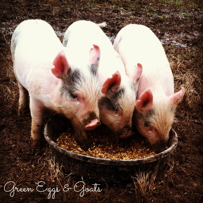 Jackson Craigslist Farm And Garden: Pasture Raised Pigs
