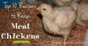 Top 10 Reasons to Raise Meat Chickens