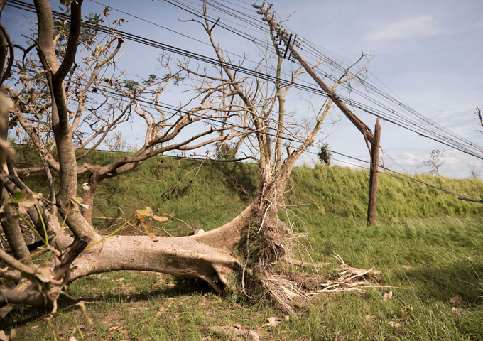 Trees and power lines downed by Hurricane Maria (Photo: SSgt.Michelle Y Alvarez-Rea, USAF)