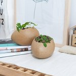 Cracked Egg Succulent Pots Gift Ideas