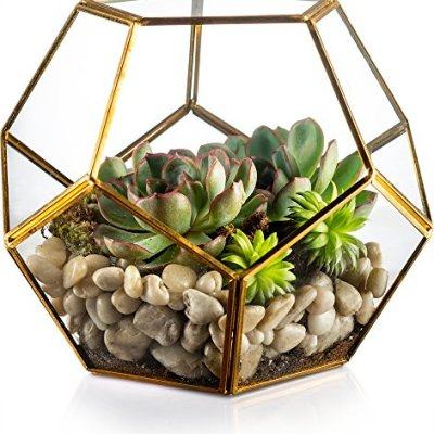 EcoQube Frame Sprouting Kit Apartment Living 9