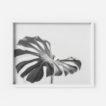 Monstera Deliciosa Art Print #2 Apartment Living