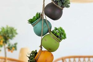 9 Hanging Planters to Plant Style Your Indoor Garden Space