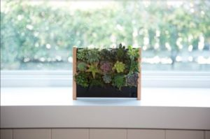 EcoQube Frame Sprouting Kit Apartment Living