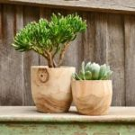 Natural Timber Handmade Pots Apartment Living