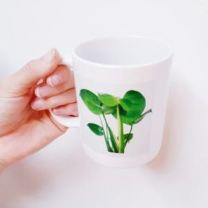 Monstera Mugs Accessories