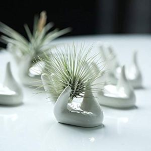 Dahey Hand Air Plant Holder Apartment Living [tag]
