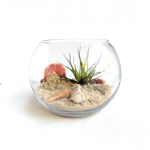 Air Plant Seascape Terrarium Apartment Living beach