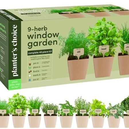 Indoor Organic Herb Garden Windowsill Kit Apartment Living herbs