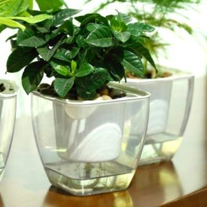 Clear Self Watering Planter Gift Ideas [tag]