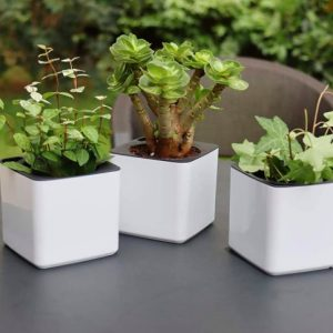 Mini White Self Watering Planters Apartment Living [tag]