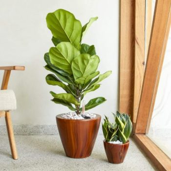 Smart Self Watering Eco Friendly Planter Apartment Living
