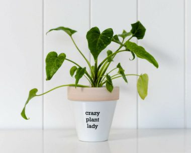 Crazy Plant Lady Ceramic Pot Planter eBay