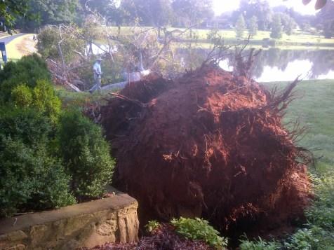 Storm Damage Cleanup (11)