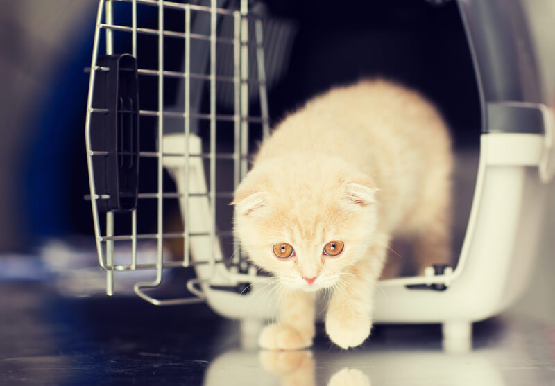 Katze in Tierpension | © panthermedia.net / Lev Dolgachov