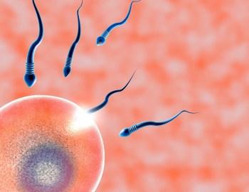 Künstliche Befruchtung / In-vitro-Fertilisation