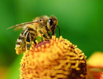 Risiko Insektenstich – Warum ein einfacher Stich so gefährlich sein kann