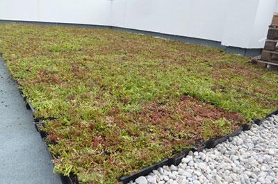 greenfield nos vegetaux