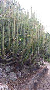 #giardino #botanico #Grancanaria #canario #cactus