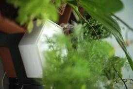 Der Luftbefeuchter eignet sich für ein gutes Raumklima und tropische Pflanzen. (Foto: Horticus)
