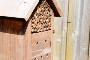 A wooden mason bee house with native bees flying into it