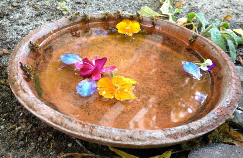 Drinking honey bees with flower petals in a shallow bird bath.