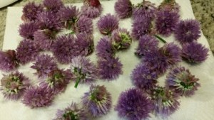 Chive blossoms drying