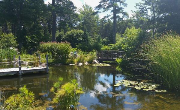 pond, organic gardening tips from CMBG