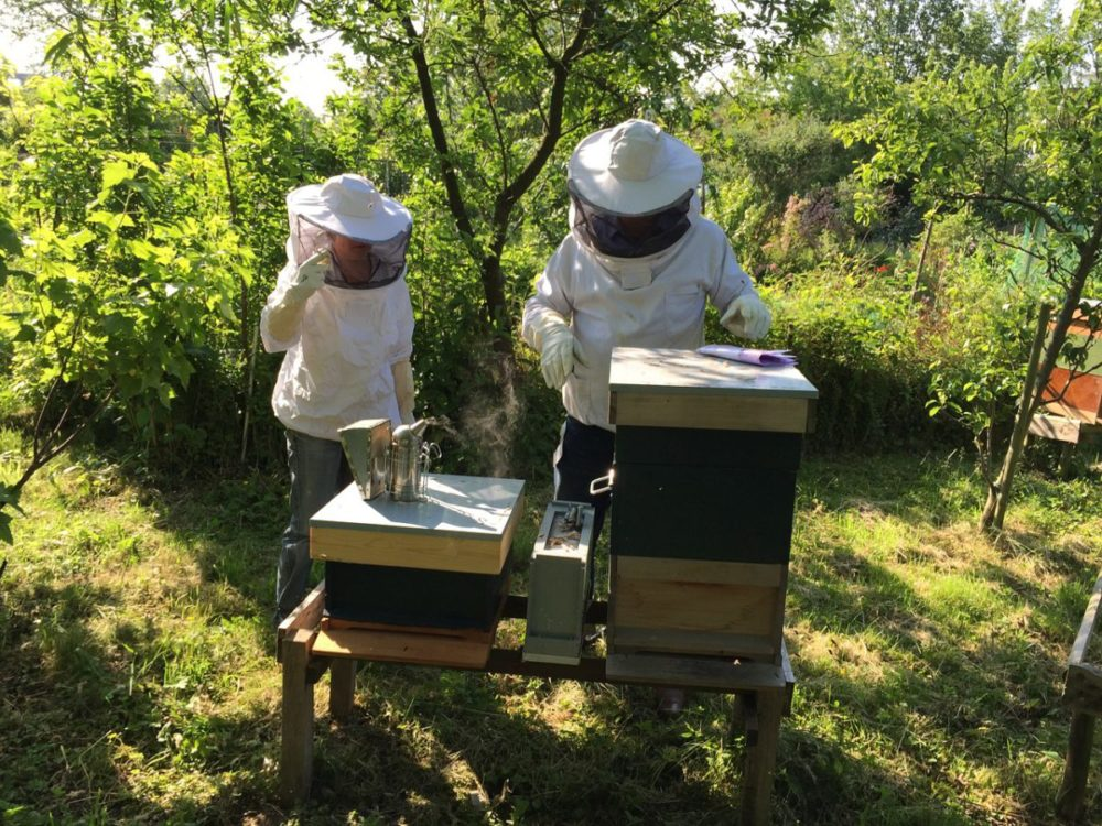 beekeeping 101, two beekeepers around a hive