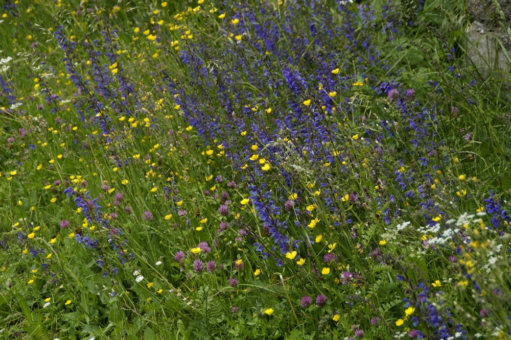 How to Create a Wildflower Garden for Bees