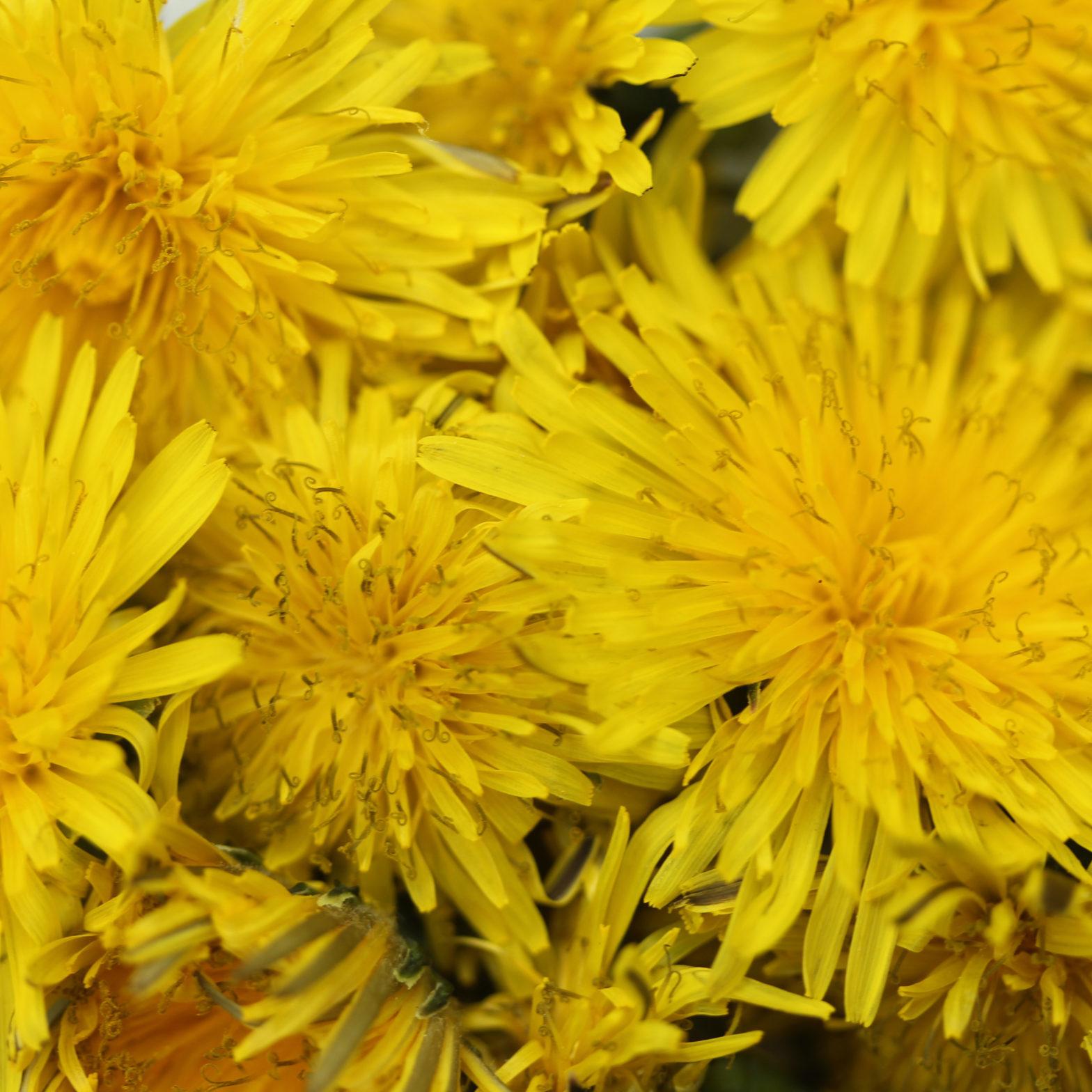 sacred-heart-of-herbalism-page-n2