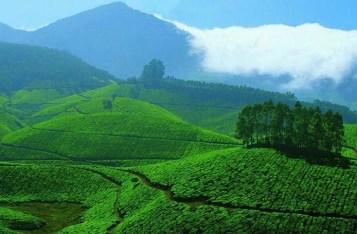 Munnar Tea Valley, Munnar Tea Estate, Munnar Hill Stations Wallpapers