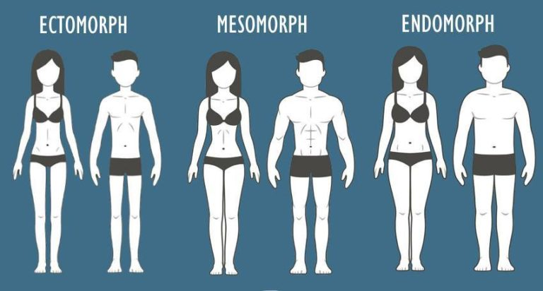 Somatotype Body Types