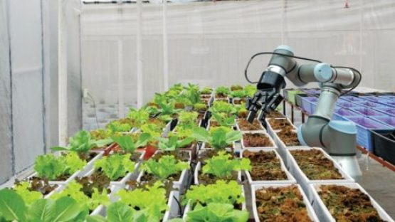 Automation Archives - Greenhouse Grower