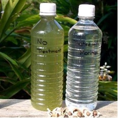 Water purification by Moringa