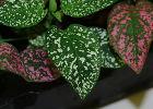 Замиокулькас начал желтеть - Комнатные растения, фото и ...
