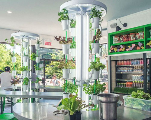 Nutritower vertical plant and herb garden
