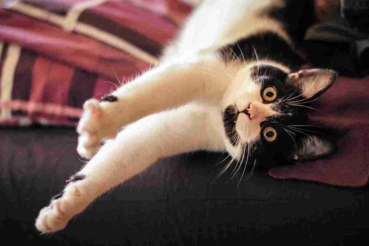 PETS-cats4.jpg?fit=1200%2C800&ssl=1