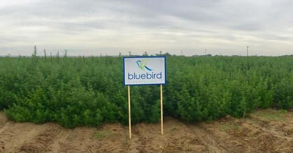 bluebird-2.jpg?fit=592%2C310&ssl=1