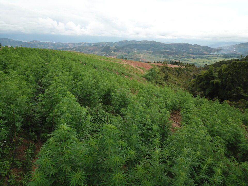 cannabis-fields-2.jpg?fit=960%2C720&ssl=1