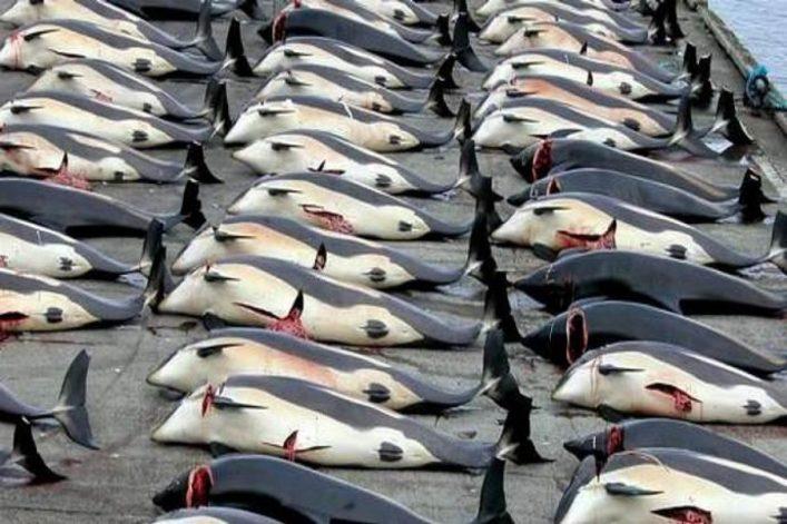 Caccia alle balene: l'Islanda ne vuole uccidere oltre duemila - greenMe