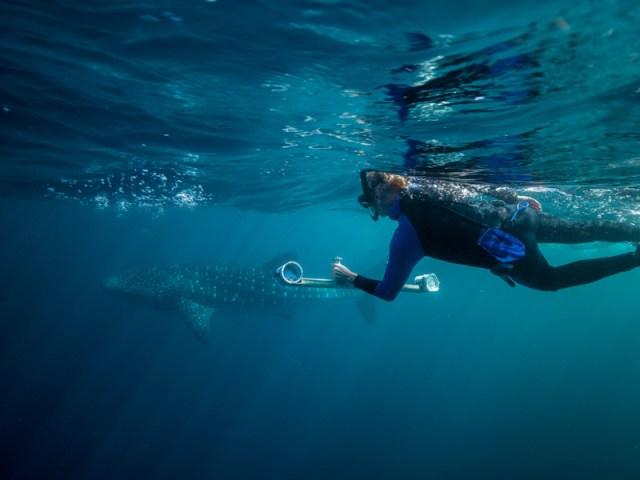 squali balena monitoraggio